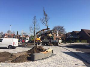 Neue Bäume Petershof 2020